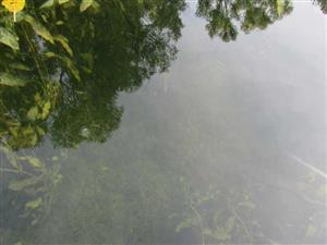 Oligotrofné až mezotrofné vody s bentickou vegetáciou