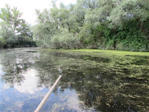 Prirodzené eutrofné a mezotrofné stojaté