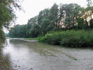Horské vodné toky a bylinné porasty pozdĺž ich brehov