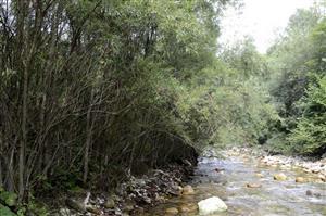 Horské vodné toky a ich drevinová vegetácia