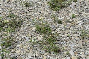 Rieky s bahnitými až piesočnatými brehmi