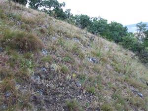 Pionierske porasty na plytkých karbonátových a bázických substrátoch zväzu Alysso-Sedion albi