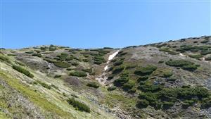najzápadnejšia  kolónia svišťov v TANAPe
