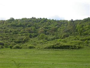 lokalita Petrovice,Jestice