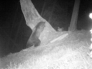 medvede kalamita pod Mníchom