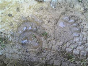 stopy v blate