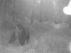jednooky medved križna