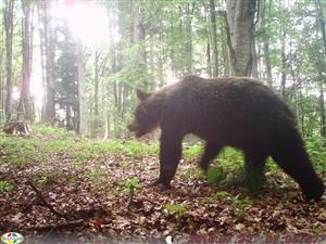 foto medveď