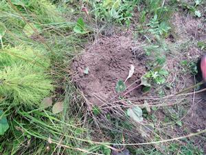 mravenisko rozhrabané medveďom
