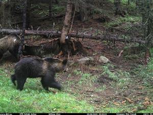 dva medvede